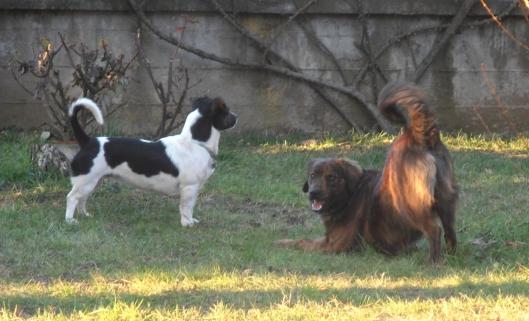 Chicca & Ronnie, in posa irriverente, profilo sinistro